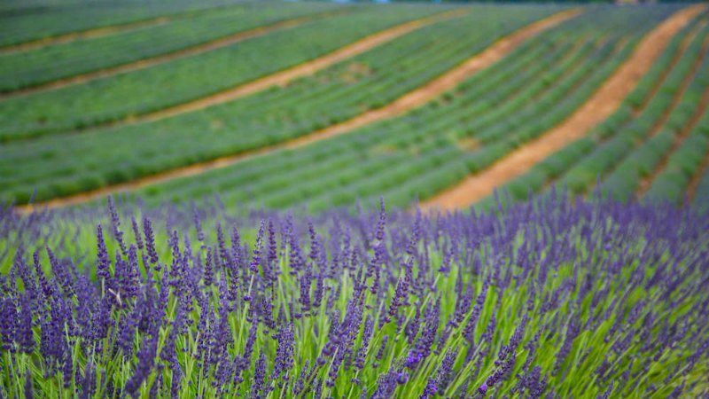 Provence França Roteiro de Viagem
