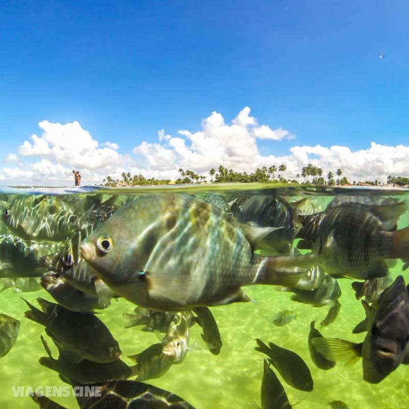 Melhores Praias de Pernambuco: Porto de Galinhas