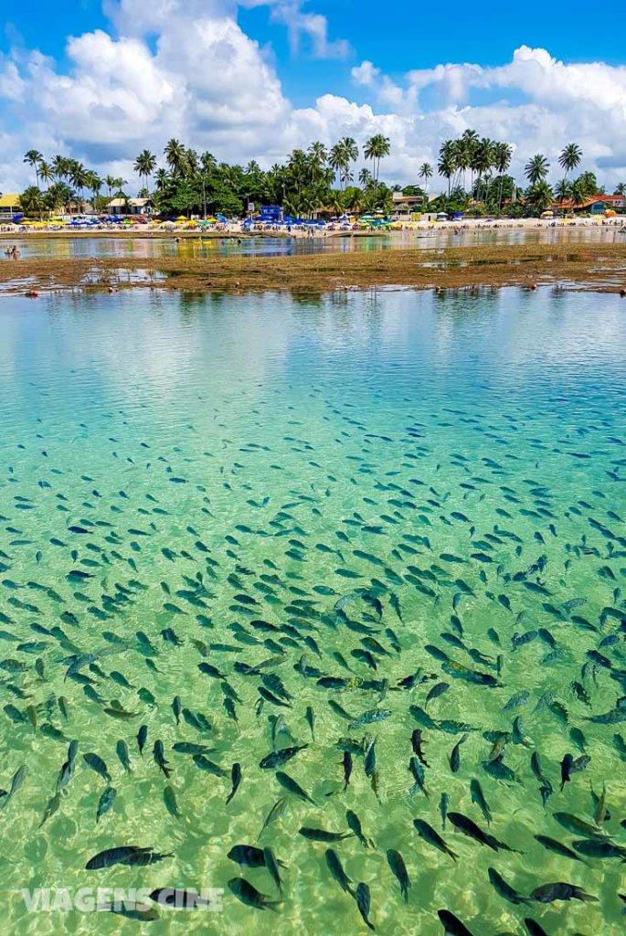 As 7 Maravilhas da Natureza do Brasil: Melhores Destinos de Ecoturismo - Porto de Galinhas