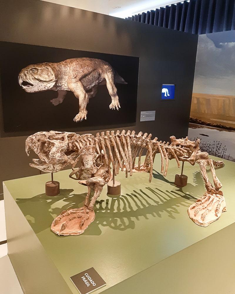 Esqueleto de animal pré-histórico exposto no Espaço do Conhecimento da UFMG